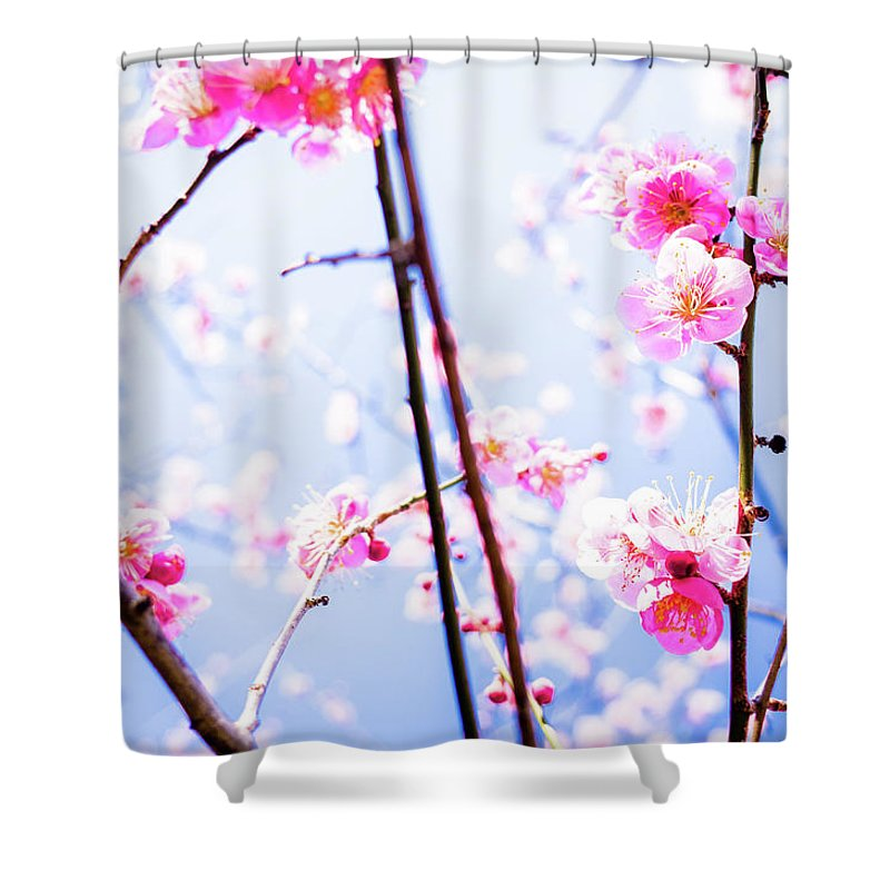 Plum Shower Curtain featuring the photograph Plum Blossoms In Bloom by Marser