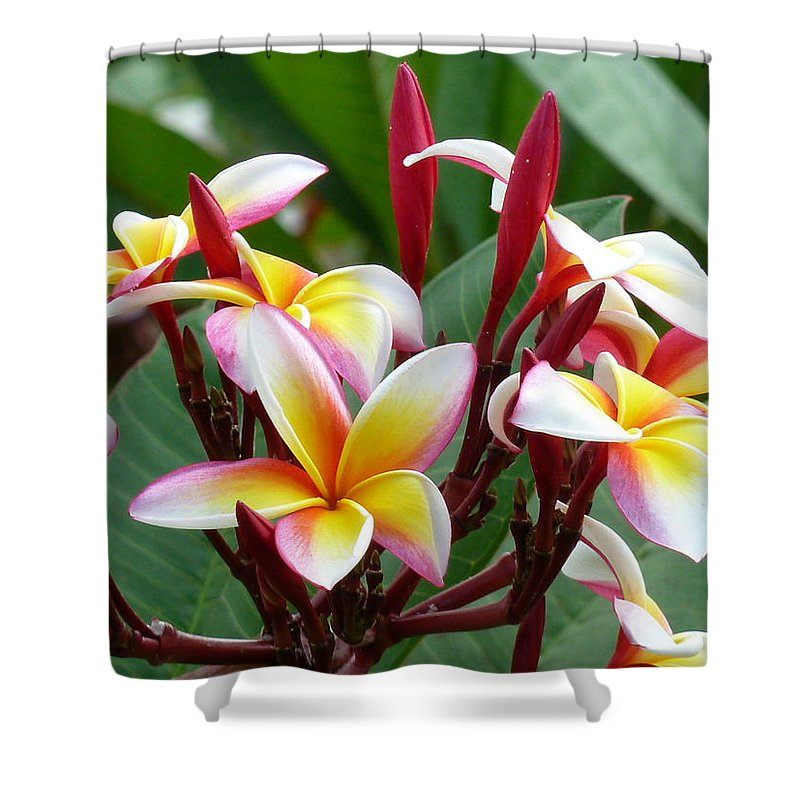Plumaria Blossom Shower Curtain featuring the photograph Plumaria . . . . by Barbara Ebeling