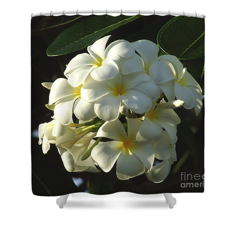 Plumeria Shower Curtain featuring the photograph Plumeria by Andrea Anderegg
