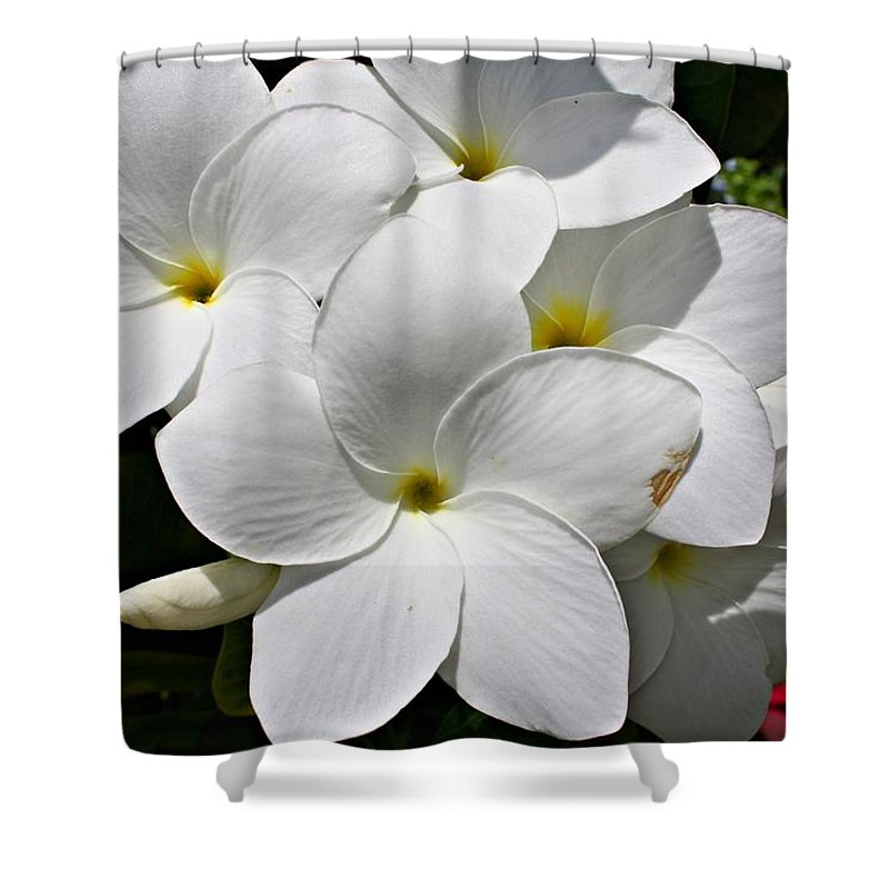 Flowers Shower Curtain featuring the photograph Plumeria Flowers by Marcelo Albuquerque