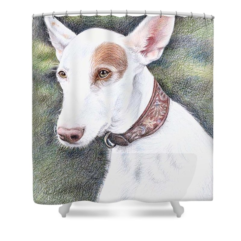 Dog Shower Curtain featuring the drawing Podenco Ibicenco by Nicole Zeug