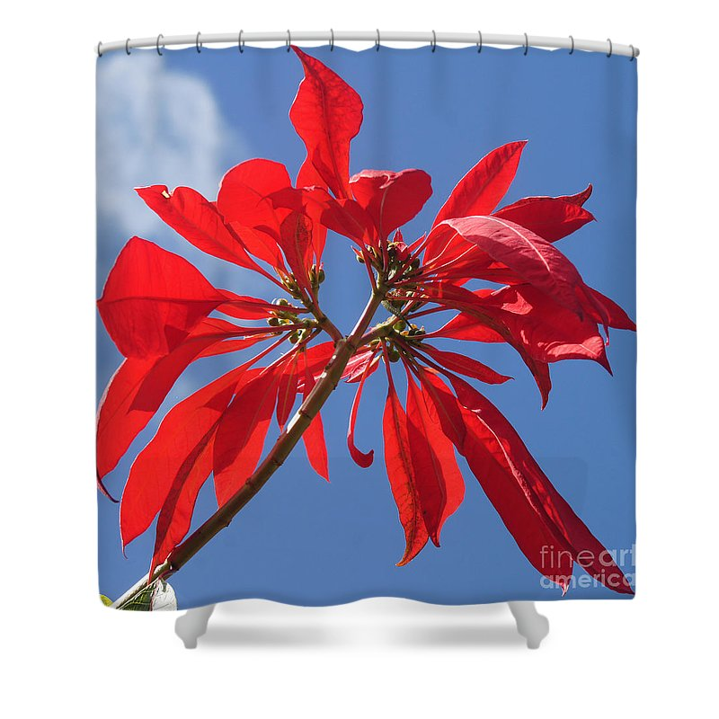 Nature Shower Curtain featuring the photograph poinsettia from Madagascar by Rudi Prott