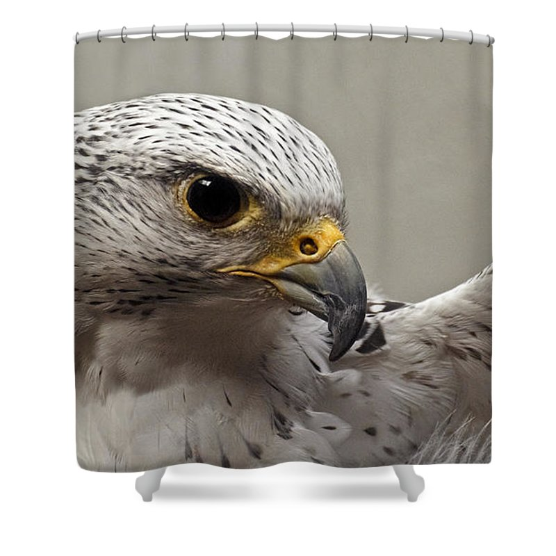 Point Defiance Gryfalcon Shower Curtain featuring the photograph Point Defiance Gryfalcon by Wes and Dotty Weber