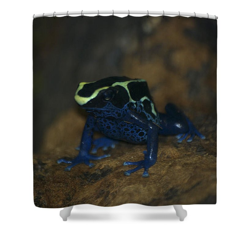 Animals Shower Curtain featuring the photograph Poisonous Frog 02 by Thomas Woolworth