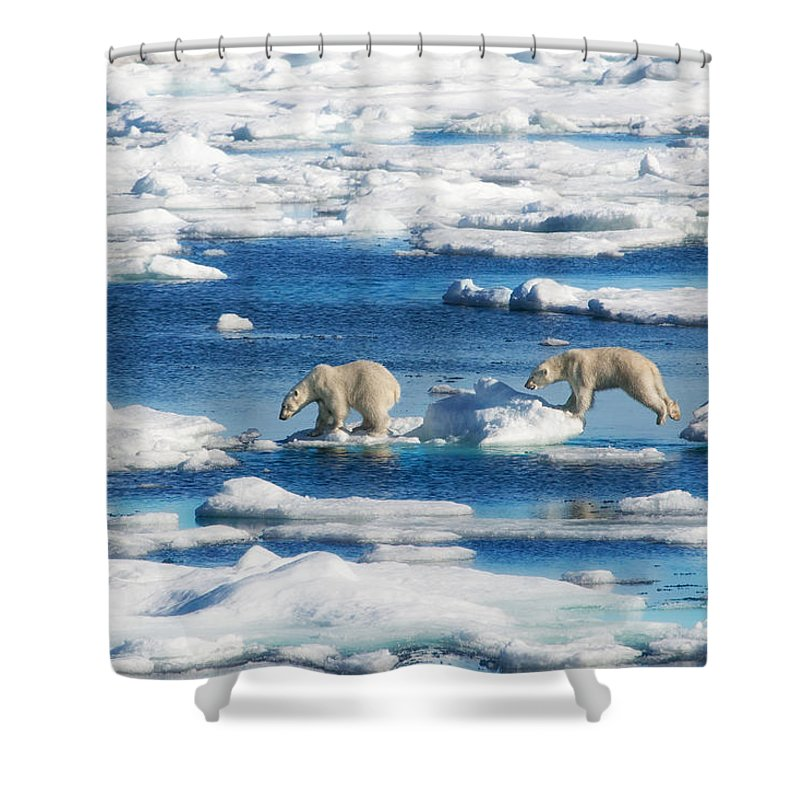 Polar Bear Cubs In Svalbard Shower Curtain For Sale By June Jacobsen