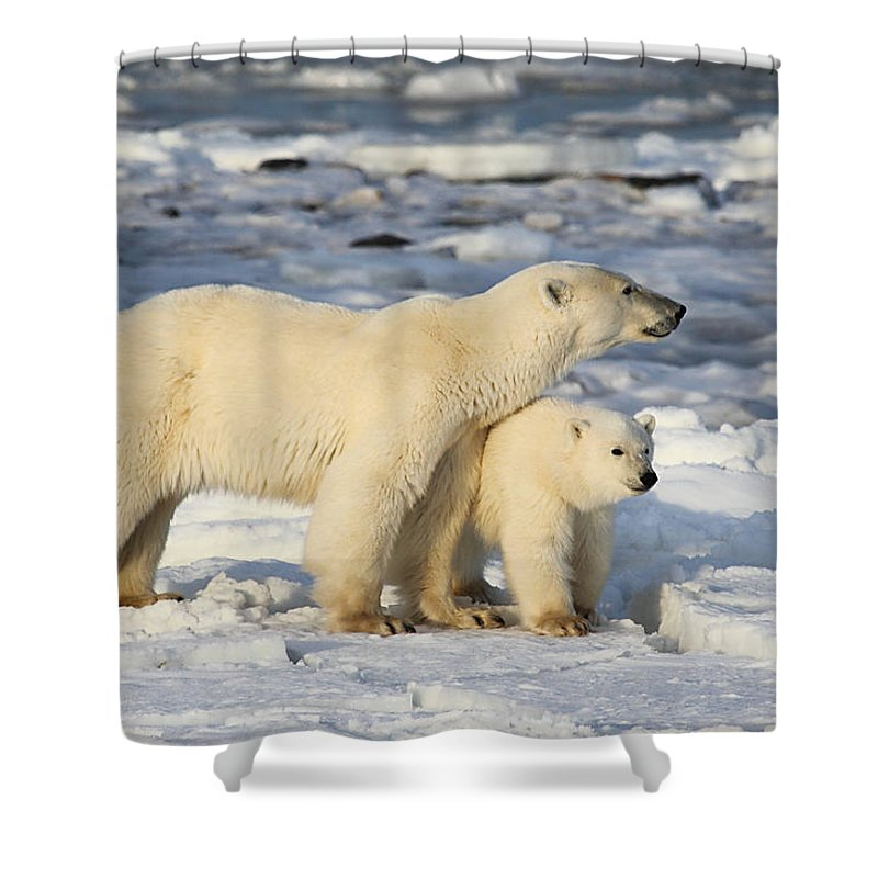 Polar Bears Shower Curtain featuring the photograph Polar Bear Mother And Cub by Carole-Anne Fooks