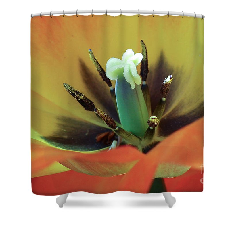 Tulip Shower Curtain featuring the photograph Pollinate Me by Terry Weaver