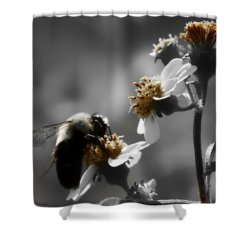Pollen Shower Curtain featuring the photograph Pollination by Debra Forand