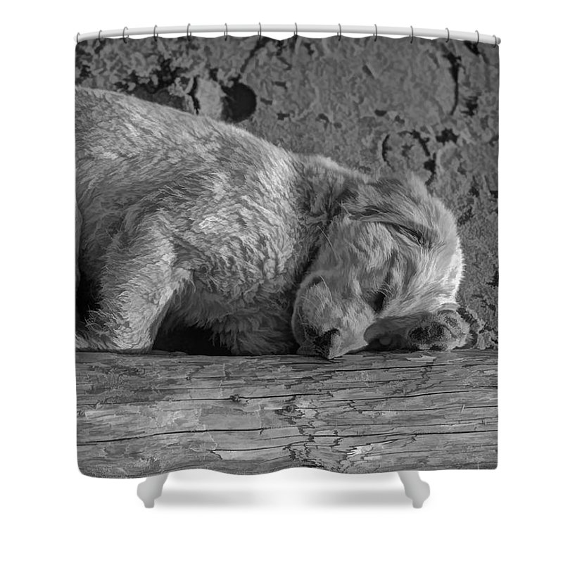 Puppy Shower Curtain featuring the photograph Pooped Puppy Bw by Steve Harrington