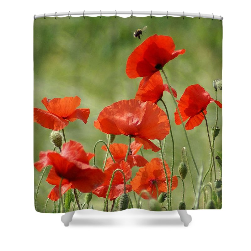 Poppies Shower Curtain featuring the photograph Poppies 1 by Carol Lynch