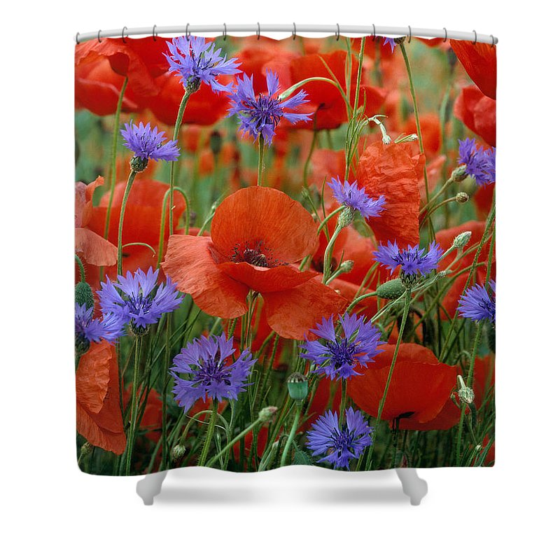 Poppies Shower Curtain Featuring The Photograph And Cornflowers By Hans Reinhard