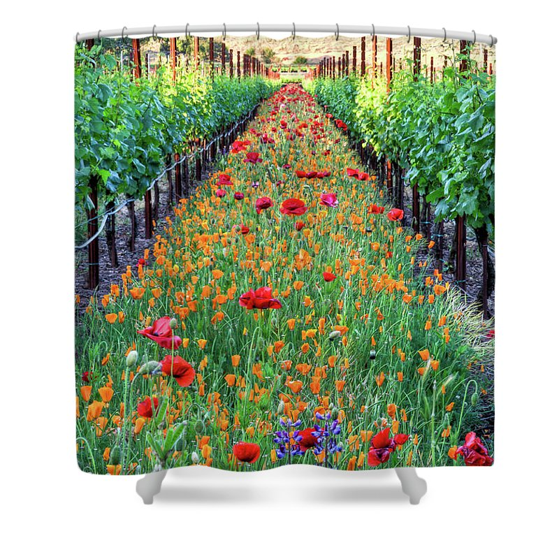 Tranquility Shower Curtain featuring the photograph Poppy Lined Vineyard by Rmb Images / Photography By Robert Bowman