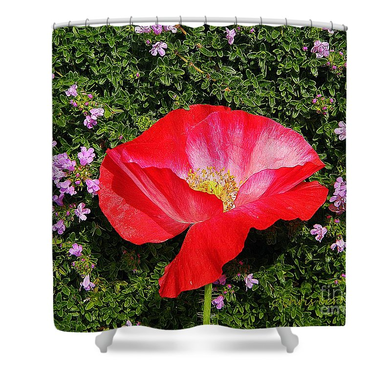 Nature Shower Curtain featuring the photograph Poppy On Thyme by Chris Berry