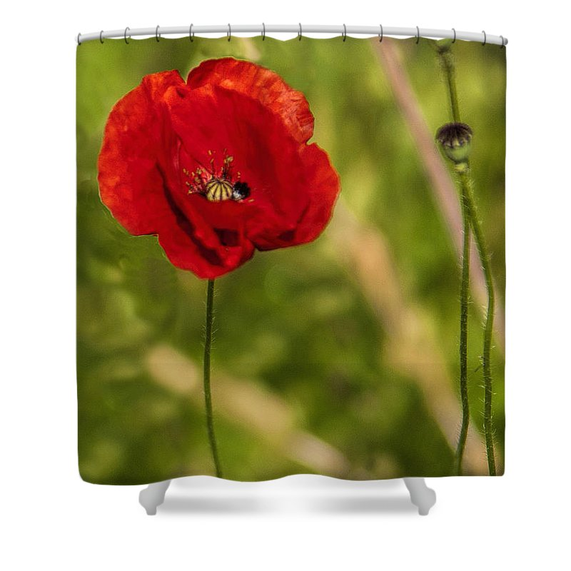 Poppy Shower Curtain featuring the photograph Poppy by Phyllis Taylor