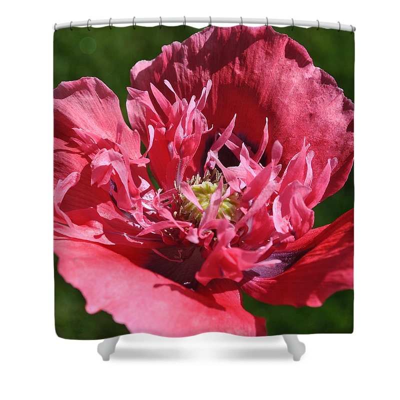 Remembrance Shower Curtain featuring the photograph Poppy Pink by Jim Hogg