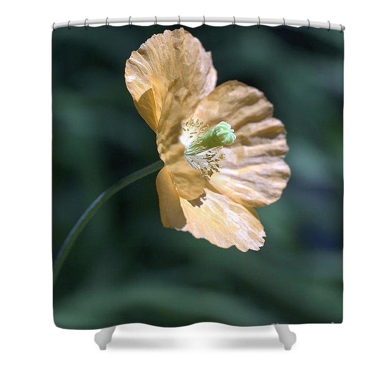Poppy Orange Shower Curtain featuring the photograph Poppy by Tony Cordoza