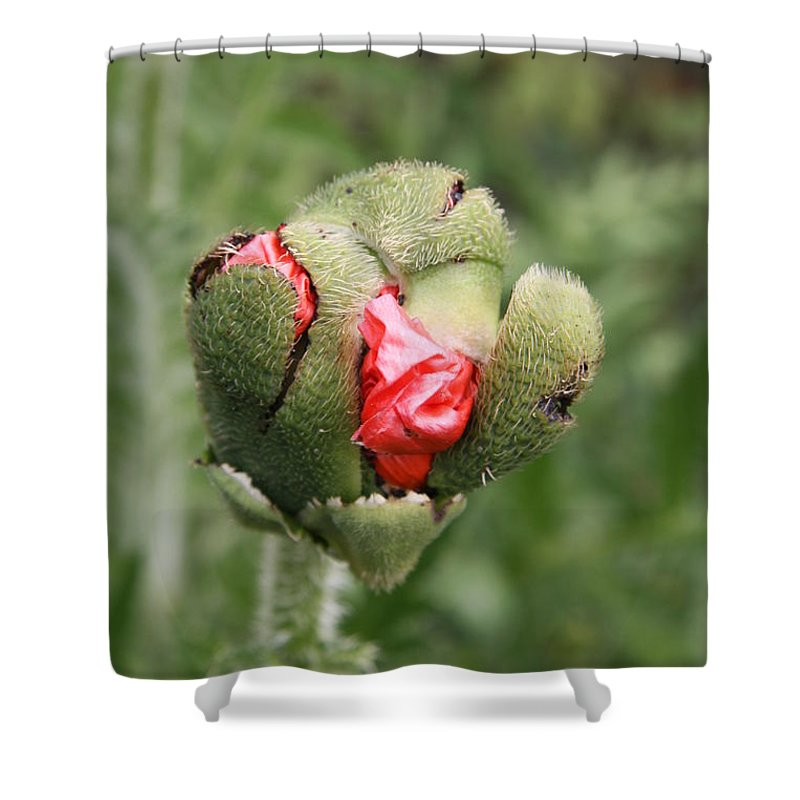 Flowers Shower Curtain featuring the photograph Poppybud by Christiane Schulze Art And Photography