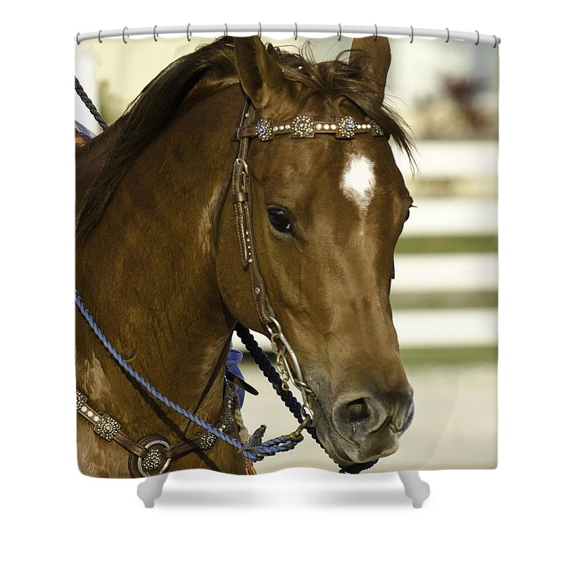 Horse Shower Curtain featuring the photograph Portrait Of A Brown Horse by Jay Droggitis