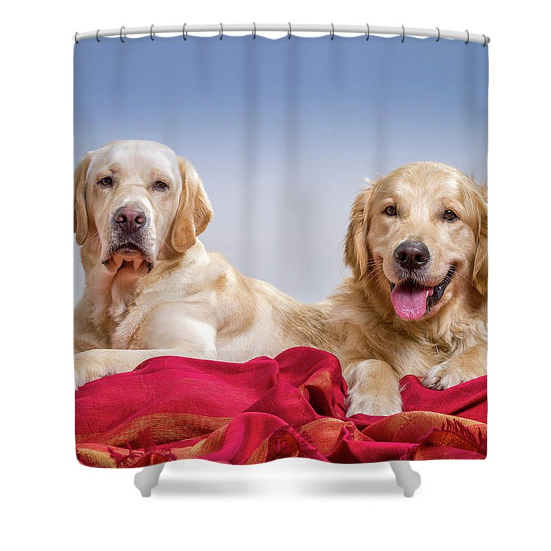 Photography Shower Curtain featuring the photograph Portrait Of A Golden Retriever by Animal Images