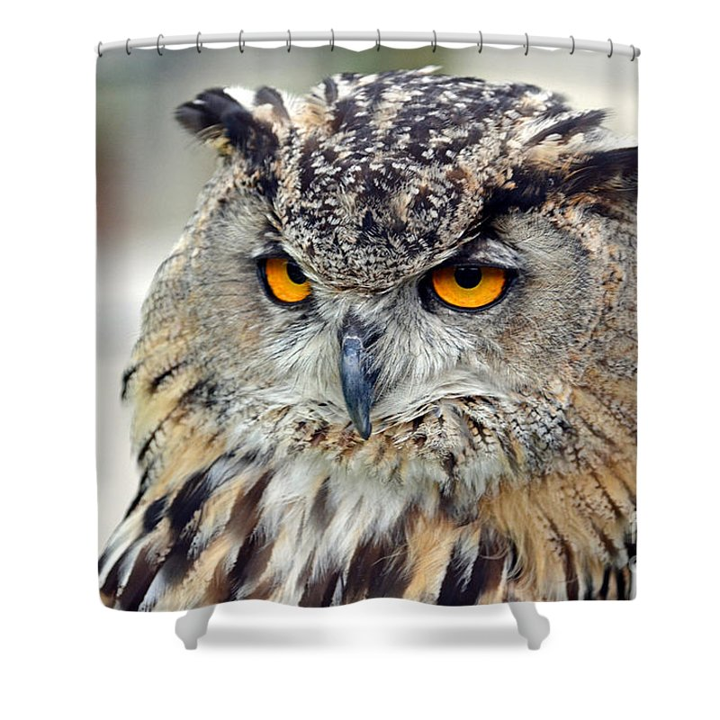 Jim Fitzpatrick Shower Curtain featuring the photograph Portrait Of A Great Horned Owl II by Jim Fitzpatrick