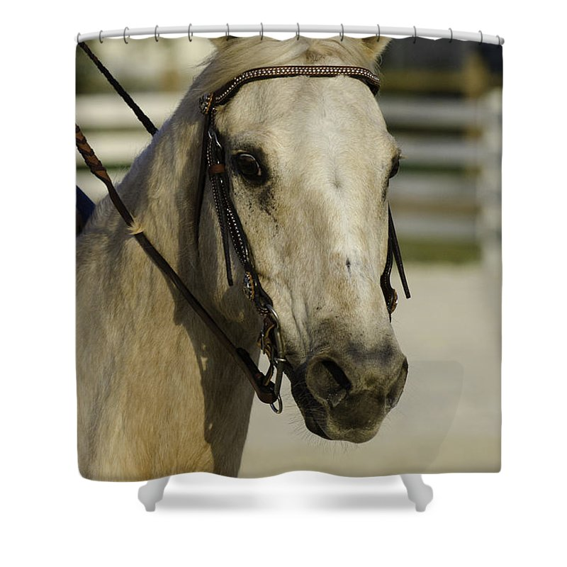 Horse Shower Curtain featuring the photograph Portrait Of A Tan Horse by Jay Droggitis