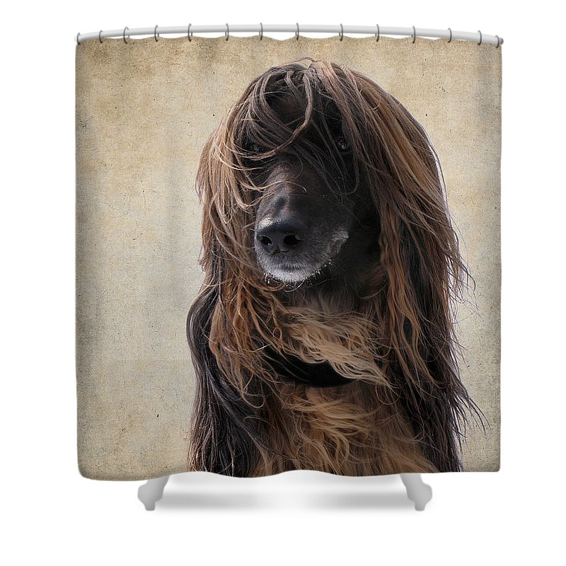 Dog Shower Curtain featuring the photograph Portrait Of An Afghan Hound by Diane Chandler