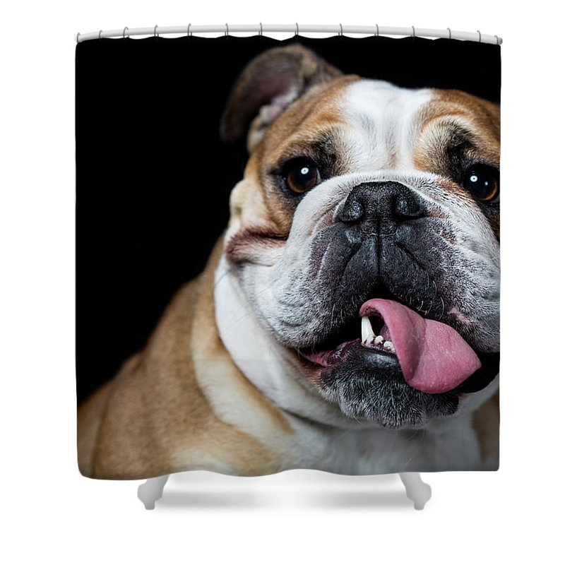 Pets Shower Curtain featuring the photograph Portrait Of An English Bulldog by Alvarez