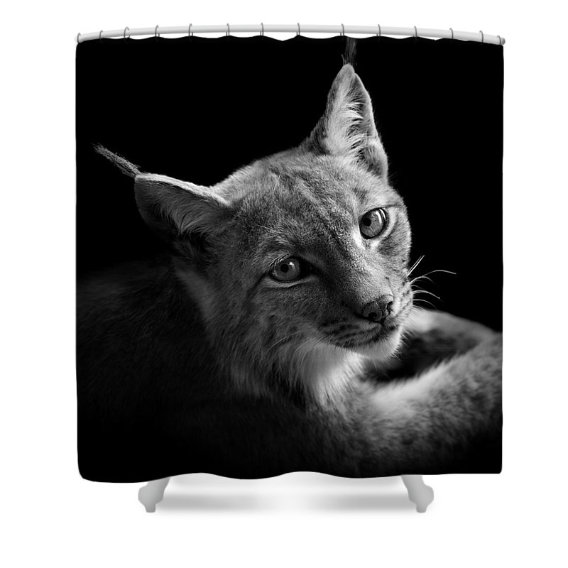 Lynx Shower Curtains