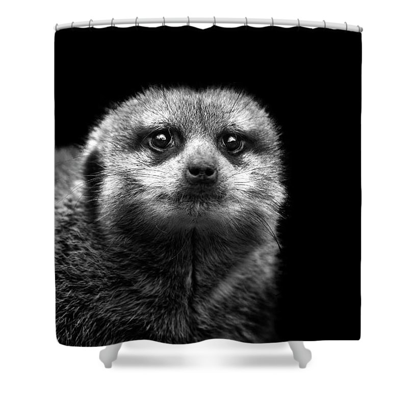 Alertness Shower Curtain featuring the photograph Portrait Of Meerkat by Malcolm Macgregor