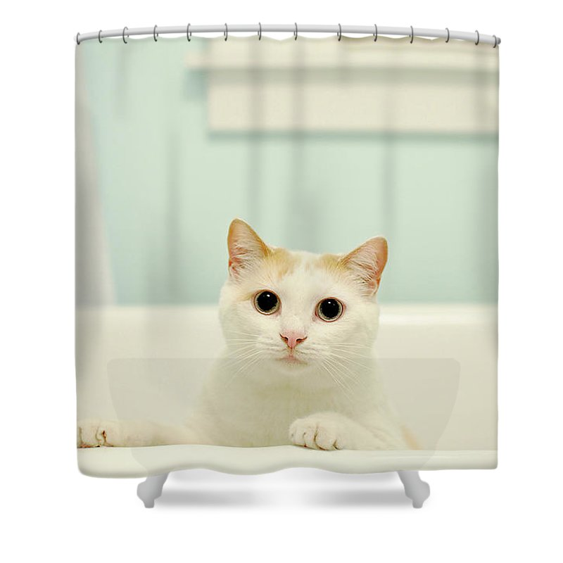 Pets Shower Curtain featuring the photograph Portrait Of White Cat by Melissa Ross