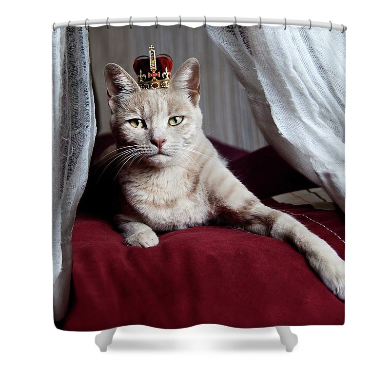 Crown Shower Curtain featuring the photograph Portrait Of White Cat With Crown On Head by By Sigi Kolbe
