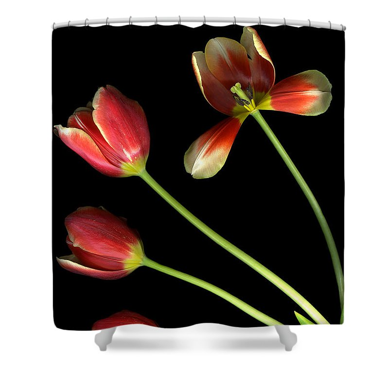 Scanography Shower Curtain featuring the photograph Pot Of Tulips by Christian Slanec