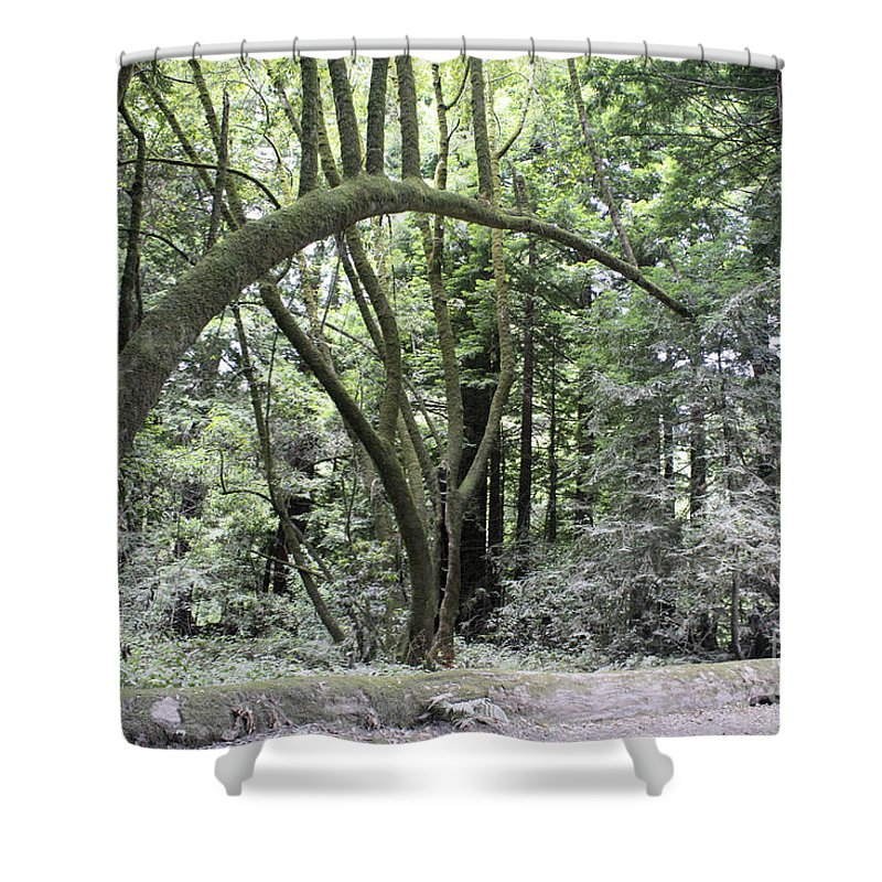 Landscape Shower Curtain featuring the photograph pr 136 - Bowed Tree by Chris Berry