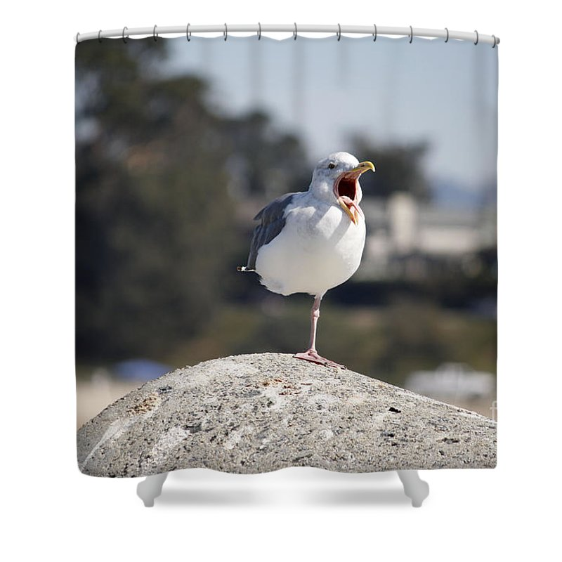 Landscape Shower Curtain featuring the photograph pr 175 - The Tired Seagull by Chris Berry