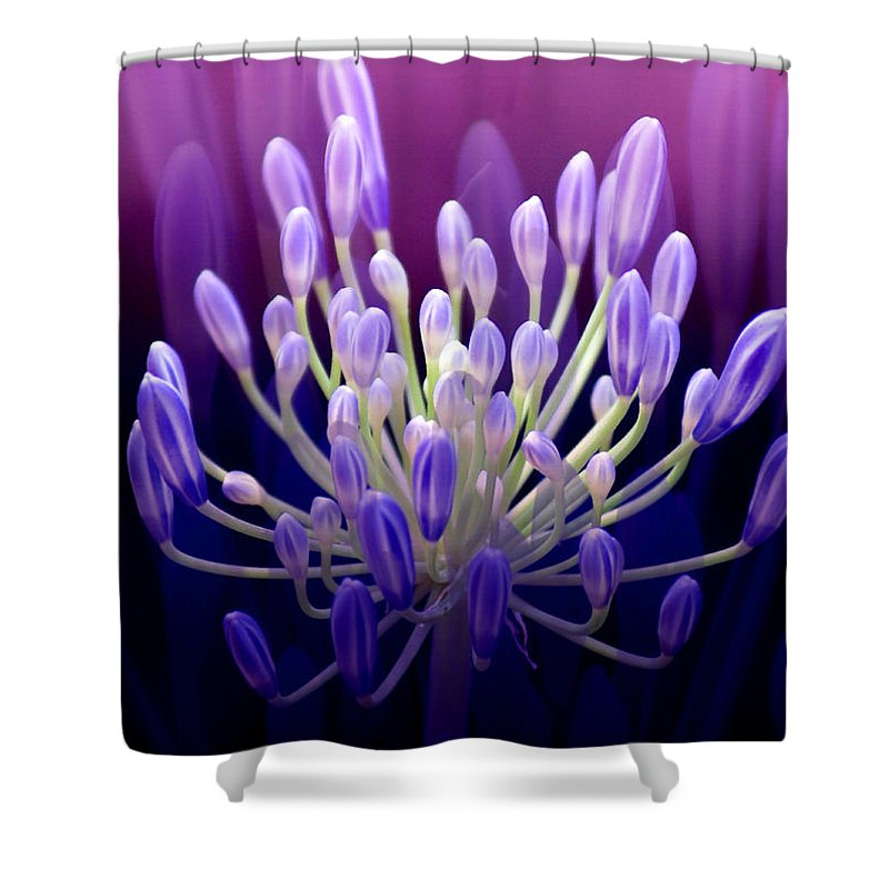 Agapanthus Shower Curtain featuring the photograph Praise by Holly Kempe
