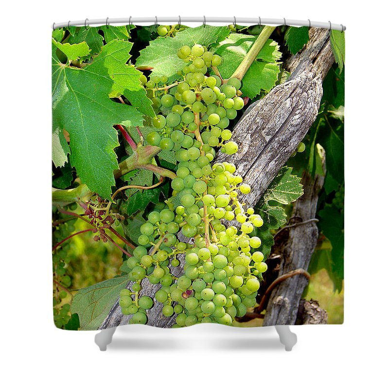Grapes Shower Curtain featuring the photograph Pre-vino by Patrick Witz