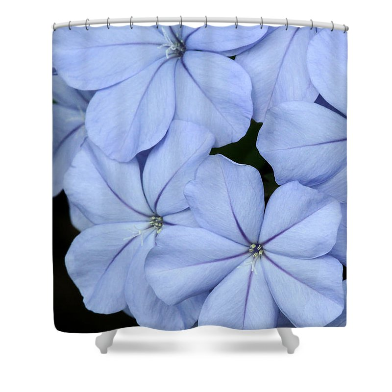 Macro Shower Curtain featuring the photograph Prettiest Plumbago by Sabrina L Ryan