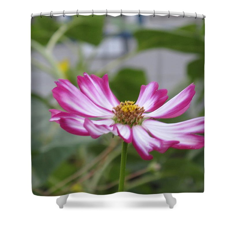 Flower Shower Curtain featuring the photograph Pretty In Fuscia by Barbara McDevitt