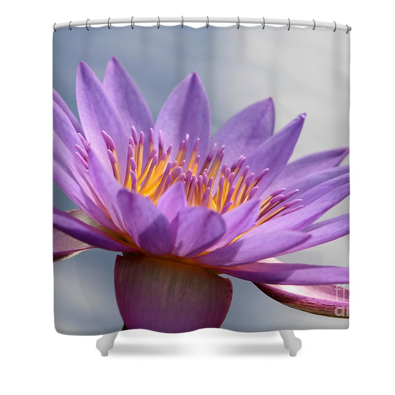 Landscape Shower Curtain featuring the photograph Pretty In Purple by Sabrina L Ryan