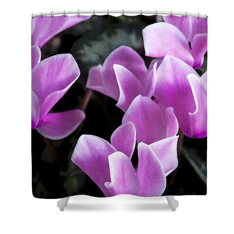 Cyclamens Shower Curtain featuring the photograph Pretty Persicum by Rich Franco