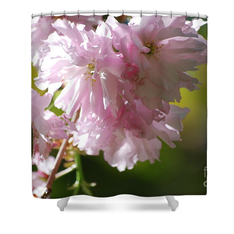 Cherry Blossoms Shower Curtain featuring the photograph Pretty Pink Cherry Blossoms by DejaVu Designs