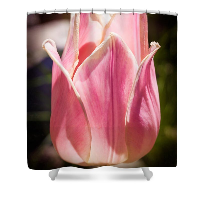 2x3 (4x6) Shower Curtain featuring the photograph Pretty Pouting Pink Tulip Abstract Garden Art By Omaste Witkowsk by Omaste Witkowski