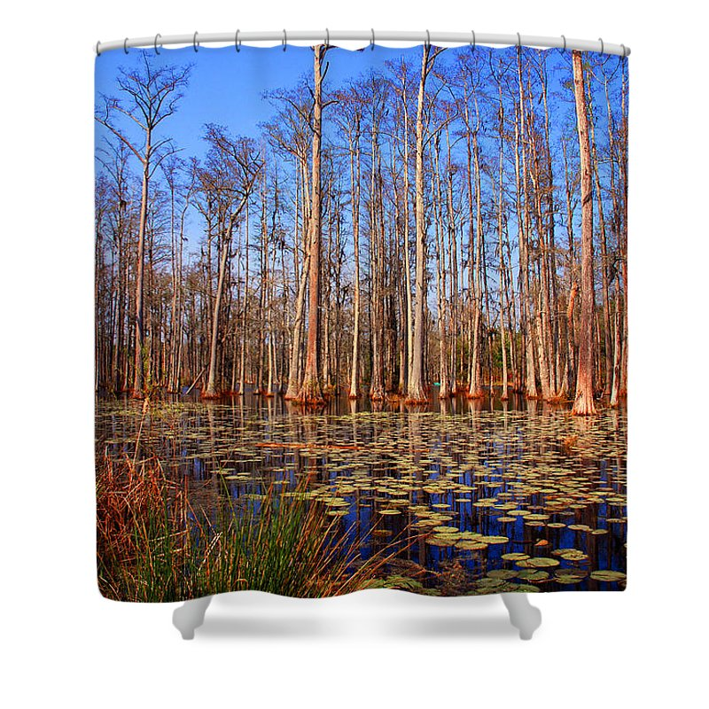 Swamp Shower Curtain featuring the photograph Pretty Swamp Scene by Susanne Van Hulst