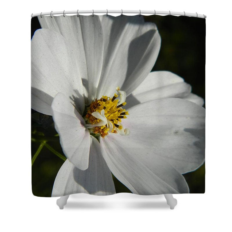 White Shower Curtain featuring the photograph Pretty White Cosmos by Nicki Bennett
