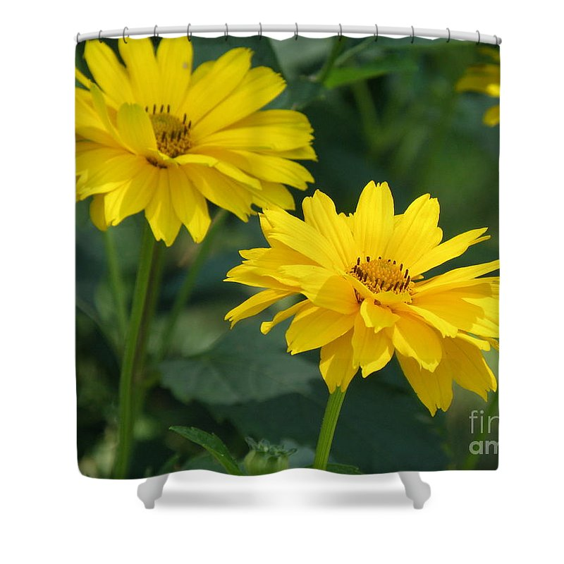 False Sunflower Shower Curtain featuring the photograph Pretty Yellow False Sunflowers In Bloom by DejaVu Designs