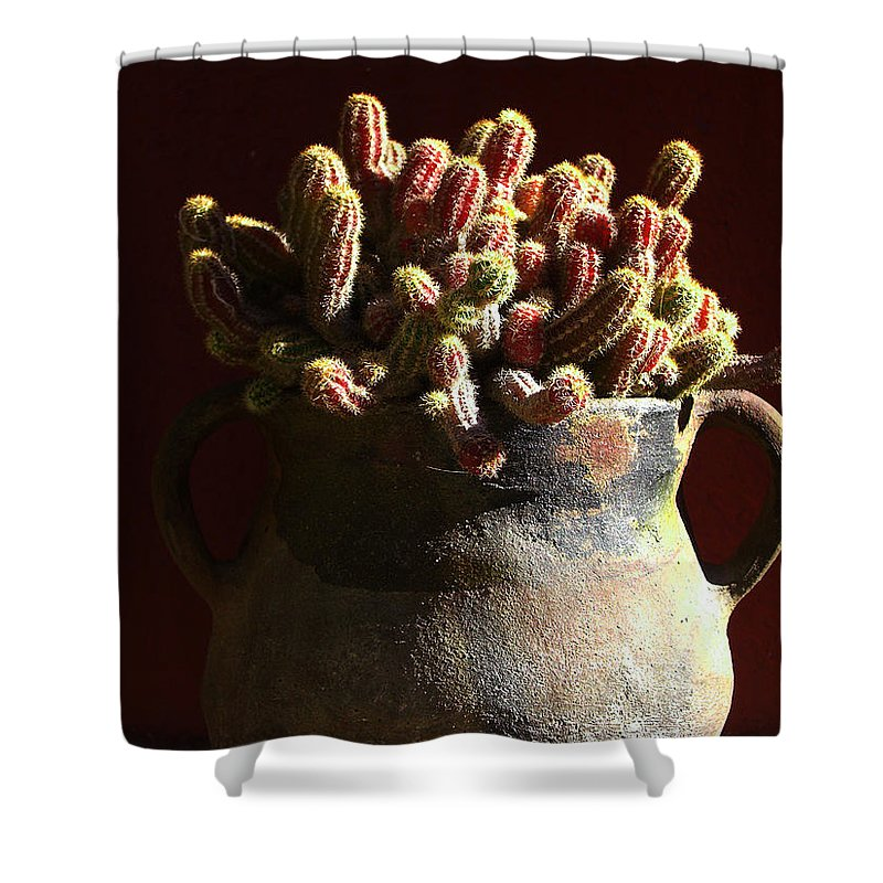 Chamaecereus Shower Curtain featuring the photograph Prickly Padres by Xueling Zou