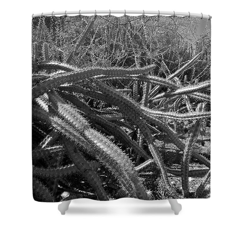 Black And White Shower Curtain featuring the photograph Prickly Perfection by Denise Mazzocco