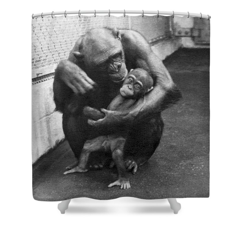 1930s Shower Curtain featuring the photograph Primate Discipline by Underwood Archives