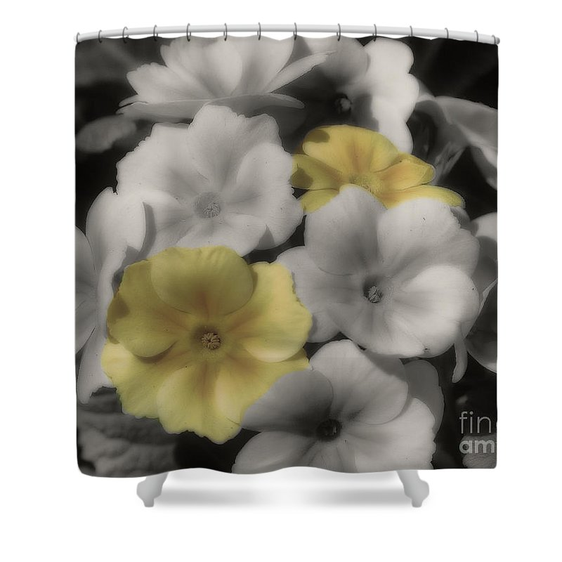 Primrose Shower Curtain featuring the photograph Primrose Flowers by Smilin Eyes Treasures
