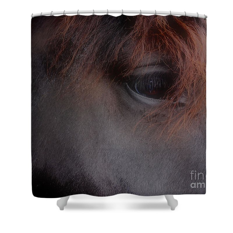 Horse Shower Curtain featuring the photograph Private Thoughts by Smilin Eyes Treasures